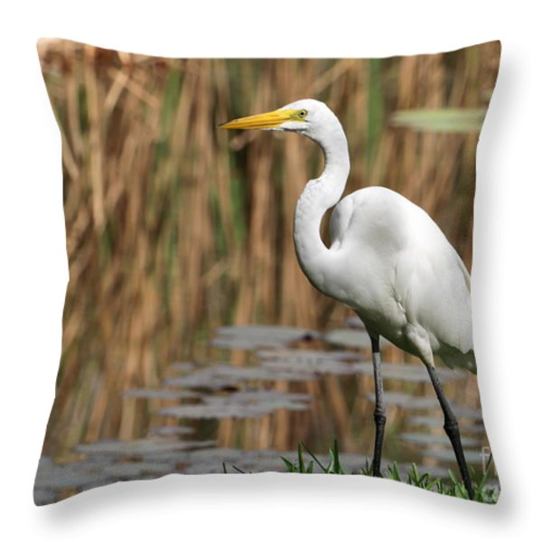 Great White Egret Taking A Stroll Throw Pillow by Sabrina L Ryan