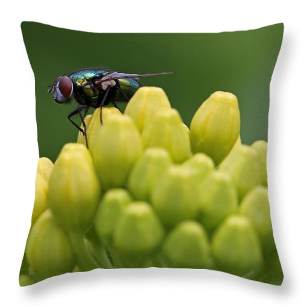 Green Bottle Fly Macro Throw Pillow by Juergen Roth