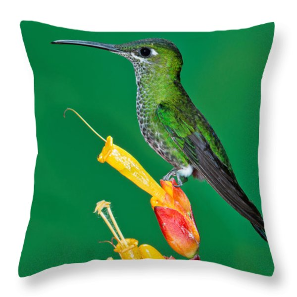 Green-crowned Brilliant Throw Pillow by Anthony Mercieca