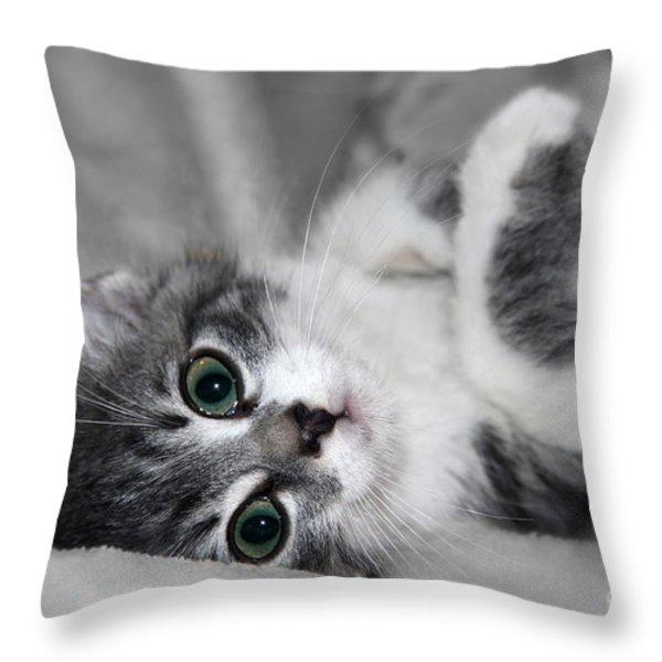 Green Eyed Kitten Throw Pillow by Teresa Zieba