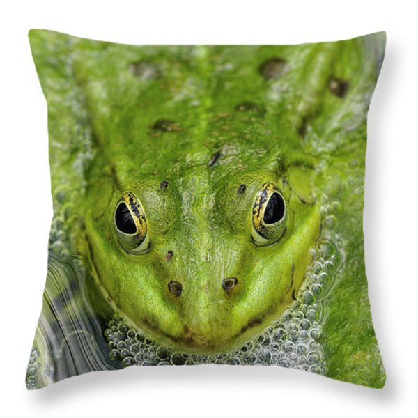 Green Frog Throw Pillow by Matthias Hauser