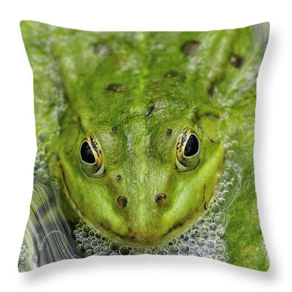 Green Frog Throw Pillow by Matthias Hauser