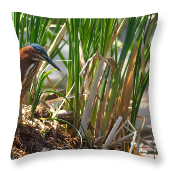 Green Heron FIshing Throw Pillow by Kathleen Bishop
