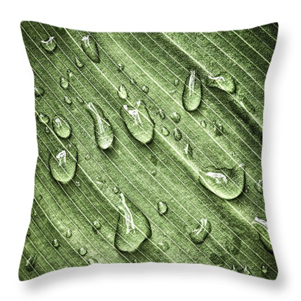 Green leaf background with raindrops Throw Pillow by Elena Elisseeva