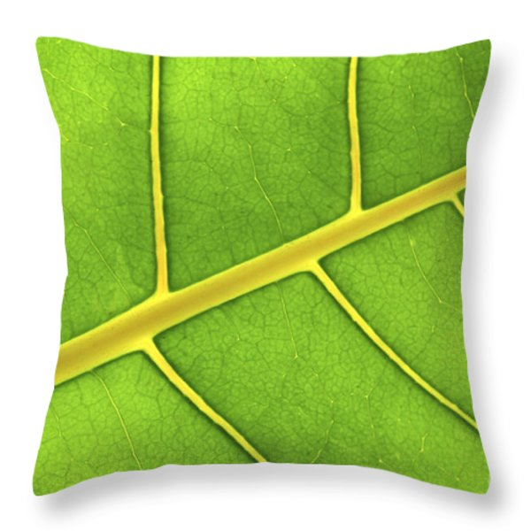Green leaf close up Throw Pillow by Elena Elisseeva