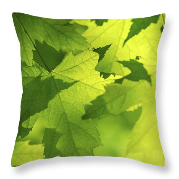 Green maple leaves Throw Pillow by Elena Elisseeva