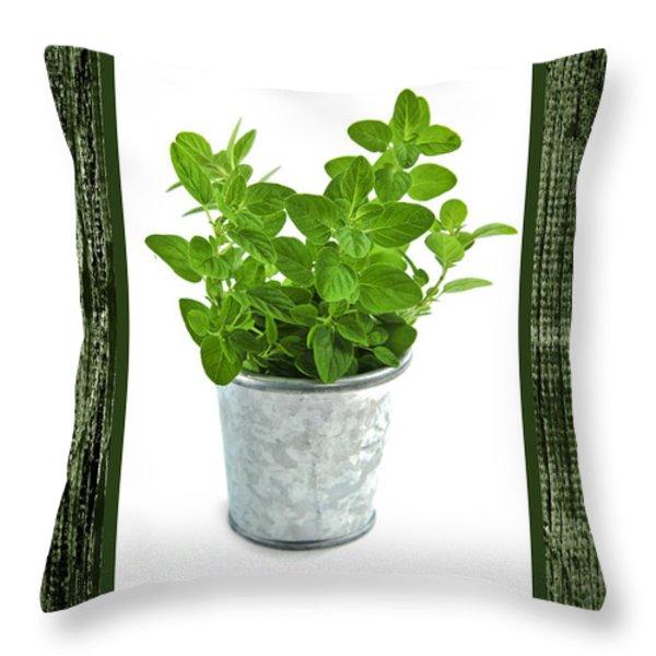 Green oregano herb in small pot Throw Pillow by Elena Elisseeva