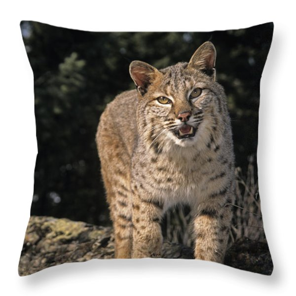G&r.grambo Mm-00006-00275, Bobcat On Throw Pillow by Rebecca Grambo