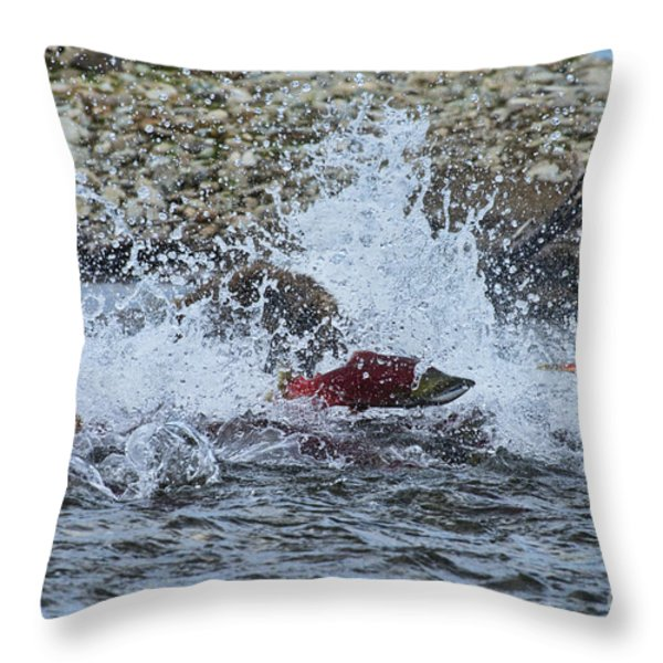 Brown Bear Chasing Salmon While Salmon Jump To Escape Throw Pillow by Dan Friend