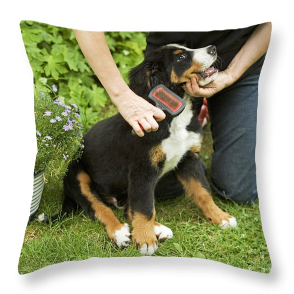 Grooming Bernese Mountain Puppy Throw Pillow by Jean-Michel Labat