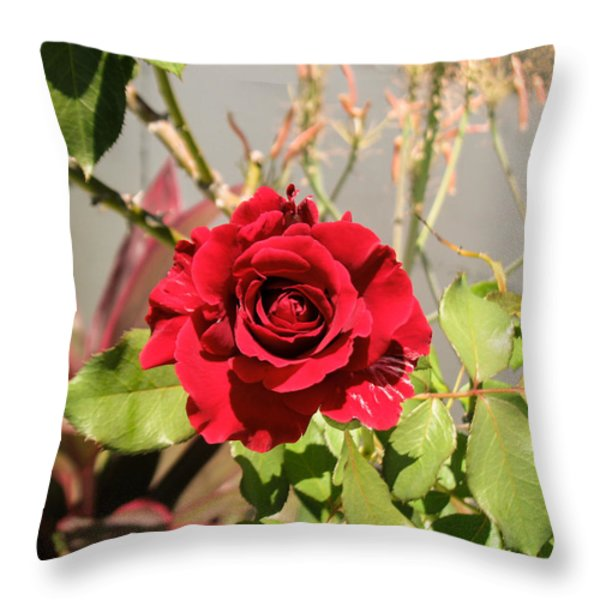 Growing Rose Throw Pillow by Zina Stromberg