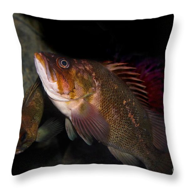 Gruper Fish 5d24129 Throw Pillow by Wingsdomain Art and Photography