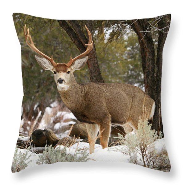 Handsome Buck Throw Pillow by Donna Kennedy