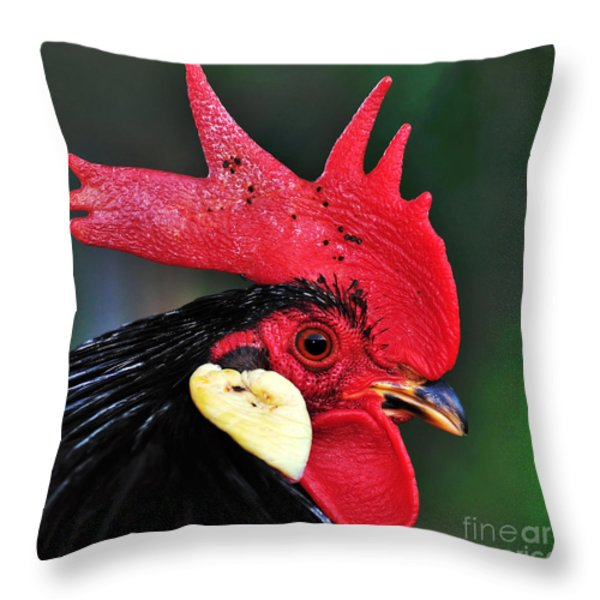 Handsome Rooster Throw Pillow by Kaye Menner