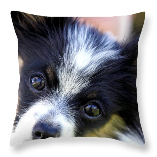 Hanna The Papillon Puppy Throw Pillow by Karon Melillo DeVega