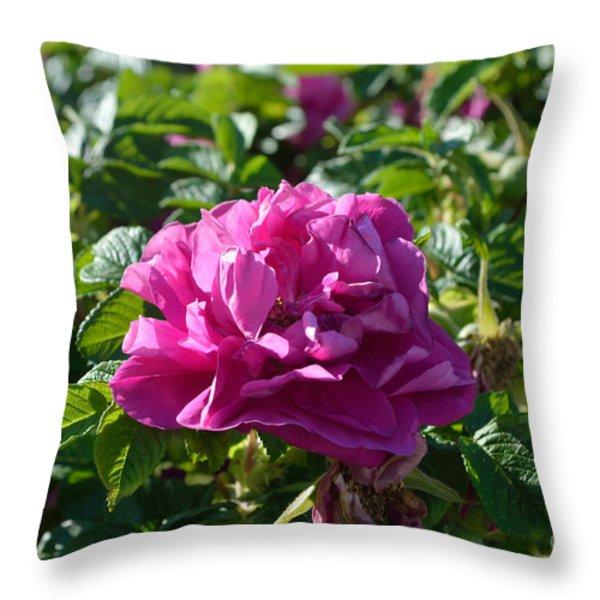 Hansa Rose At Dawn Throw Pillow by Alys Caviness-Gober