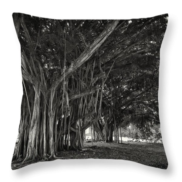HAWAIIAN BANYAN TREE ROOT STUDY Throw Pillow by Daniel Hagerman