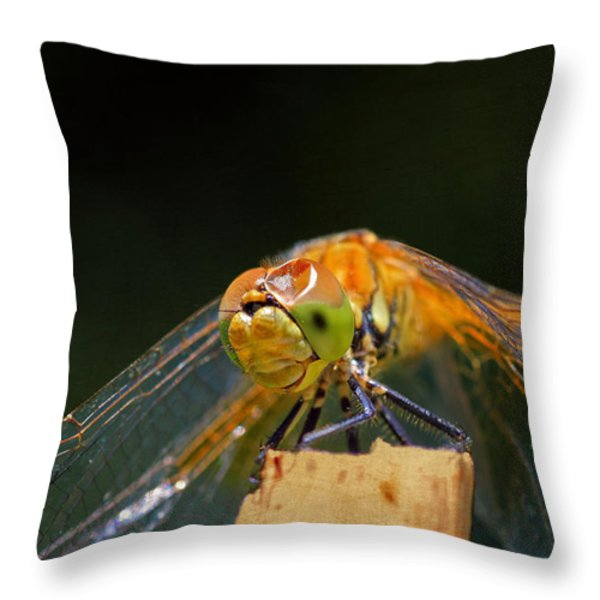 Head On Collision? Throw Pillow by Donna Kennedy