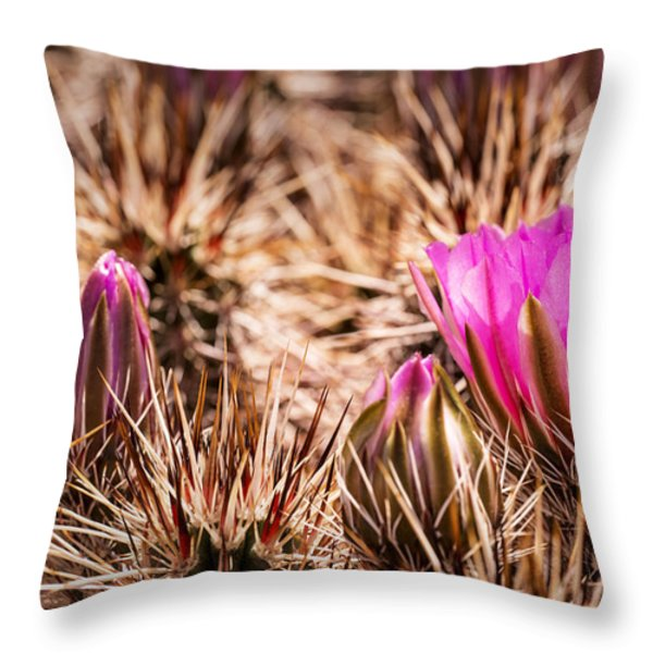 Hedgehog Cactus Flower And Buds Throw Pillow by  Onyonet  Photo Studios