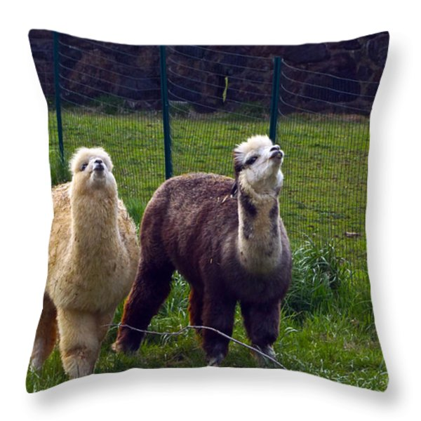 Here Comes Royalty Throw Pillow by Byron Varvarigos