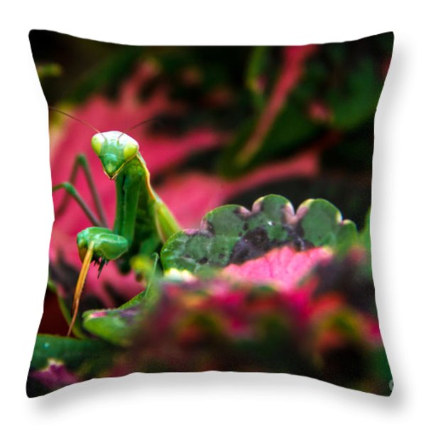 Here I Am Throw Pillow by Robert Bales