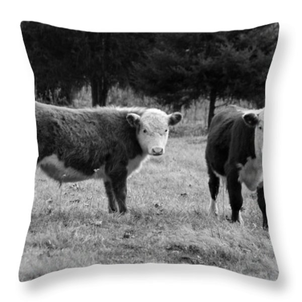 Hereford Portrait V in Black and White Throw Pillow by Suzanne Gaff