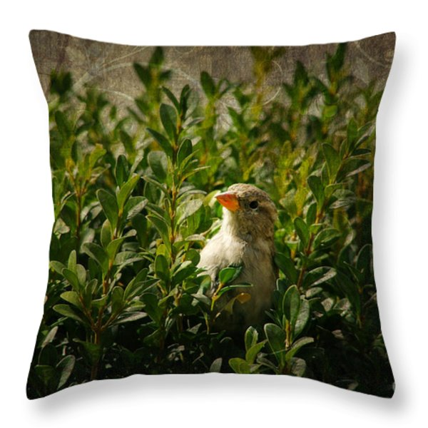 Hide And Seek Throw Pillow by Mariola Bitner