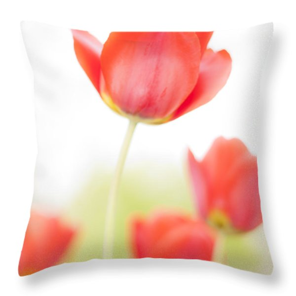 High Key Tulips Throw Pillow by Adam Romanowicz