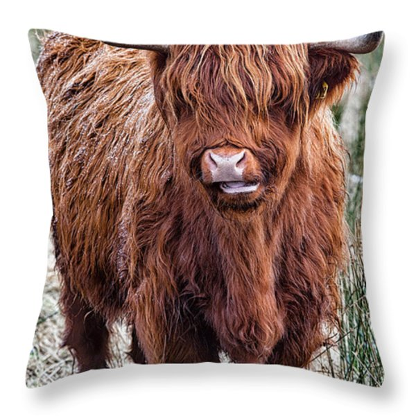 Highland Coo Throw Pillow by John Farnan