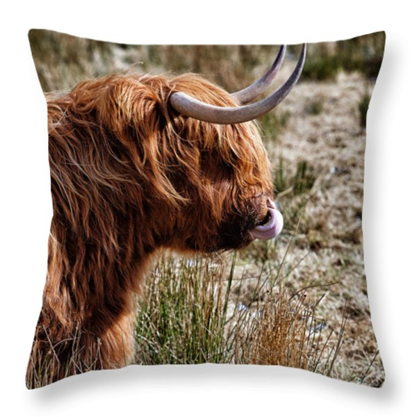 Highland Coo with tongue in nose Throw Pillow by John Farnan