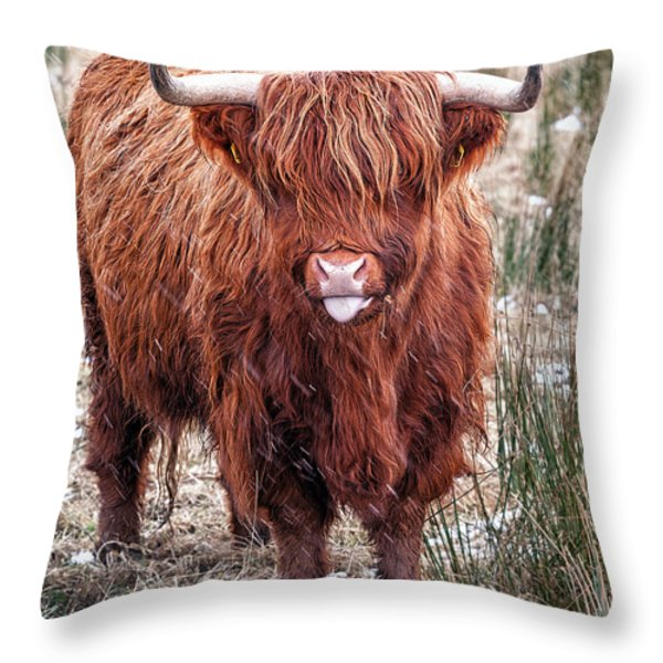 Highland Coo with tongue out Throw Pillow by John Farnan