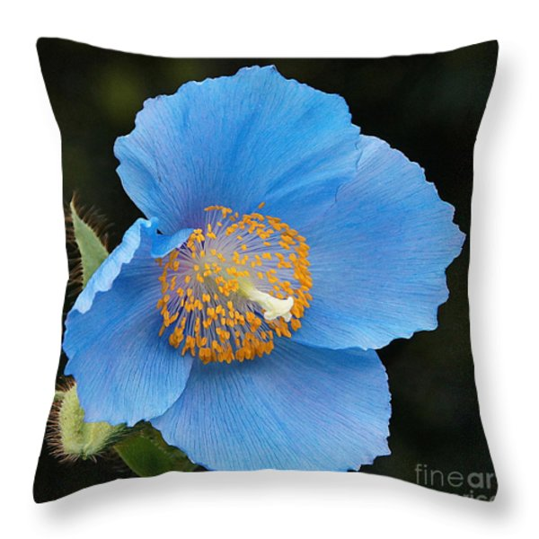 Himalayan Gift -- Meconopsis Poppy Throw Pillow by Byron Varvarigos