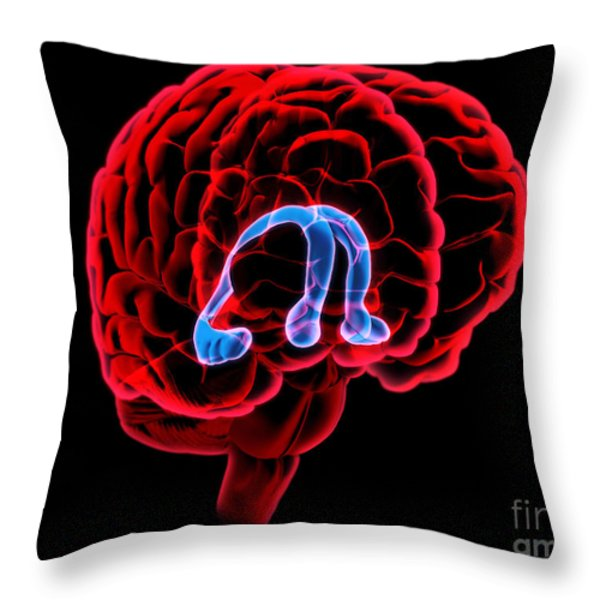 Hippocampus And Fornix Throw Pillow by Evan Oto