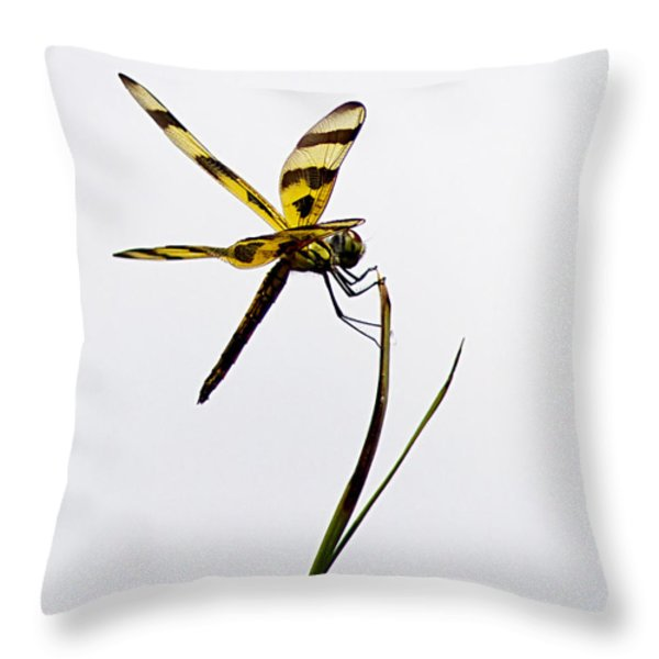 Holding On Throw Pillow by Anne Rodkin