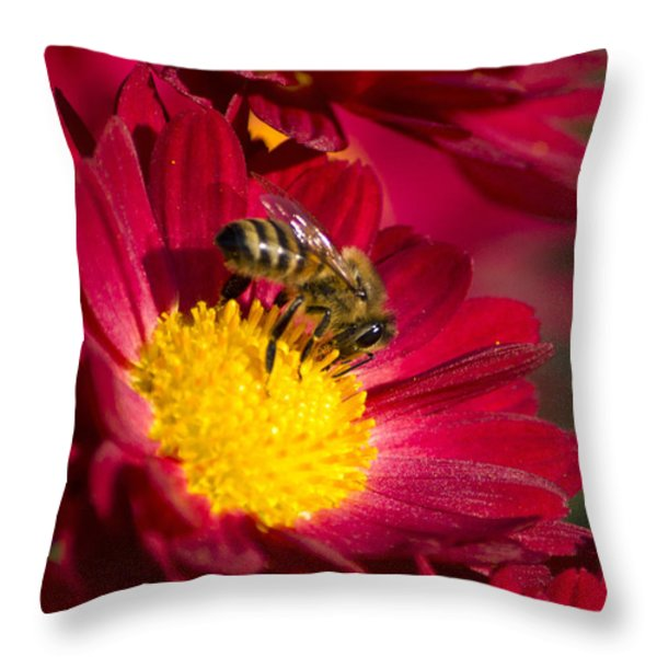 Honey Bee And Chrysanthemum Throw Pillow by Christina Rollo