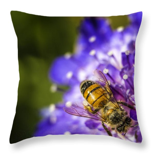 Honey Bee Throw Pillow by Caitlyn  Grasso