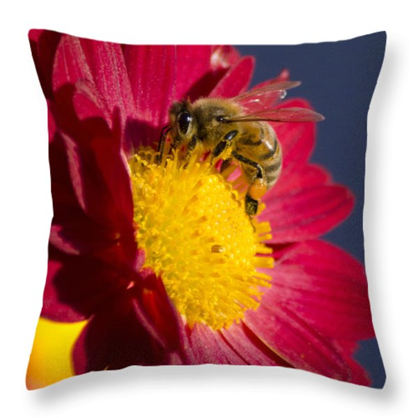 Honey Bee Throw Pillow by Christina Rollo