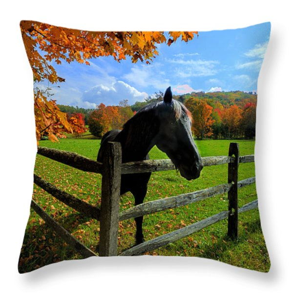 Horse under tree by fence Throw Pillow by Dan Friend