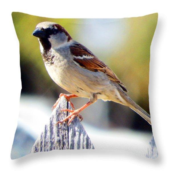 House Sparrow Throw Pillow by David G Paul