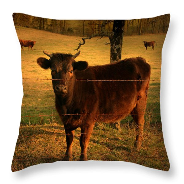 How Now Brown Cow Throw Pillow by Nina Fosdick