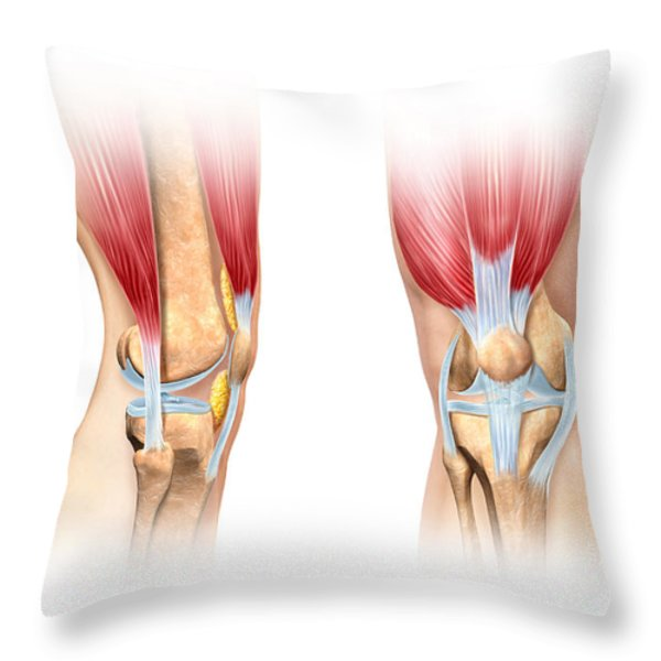 Human Knee Cutaway Illustration Throw Pillow by Leonello Calvetti