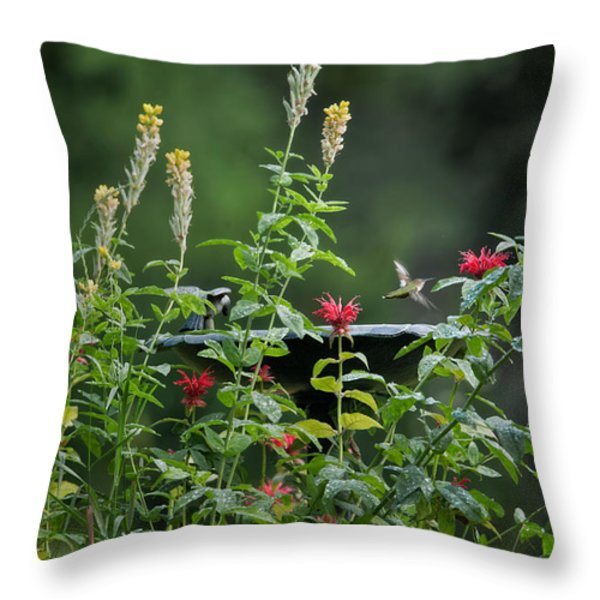 Humming Bird Throw Pillow by Bill  Wakeley