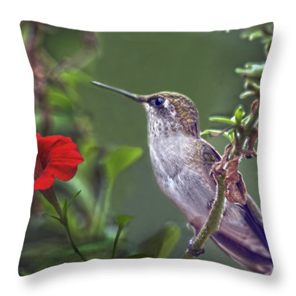 Hummingbird Delight Throw Pillow by Sandi OReilly