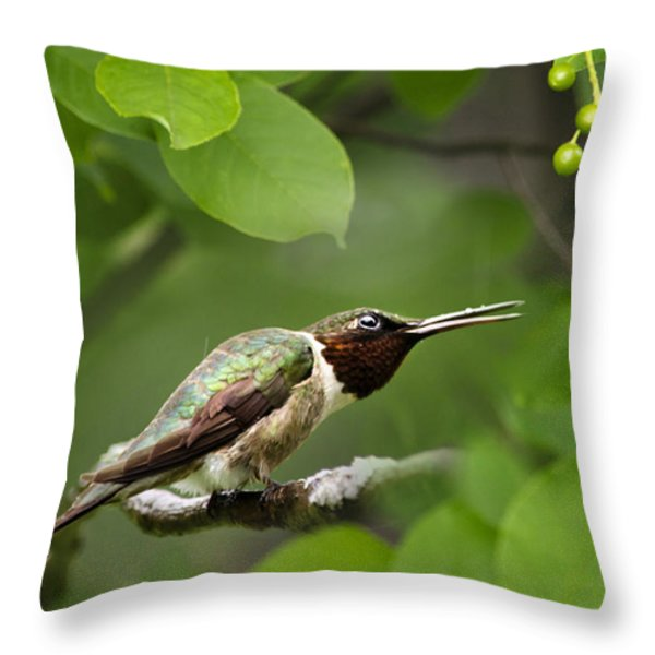 Hummingbird Hiding In Tree Throw Pillow by Christina Rollo