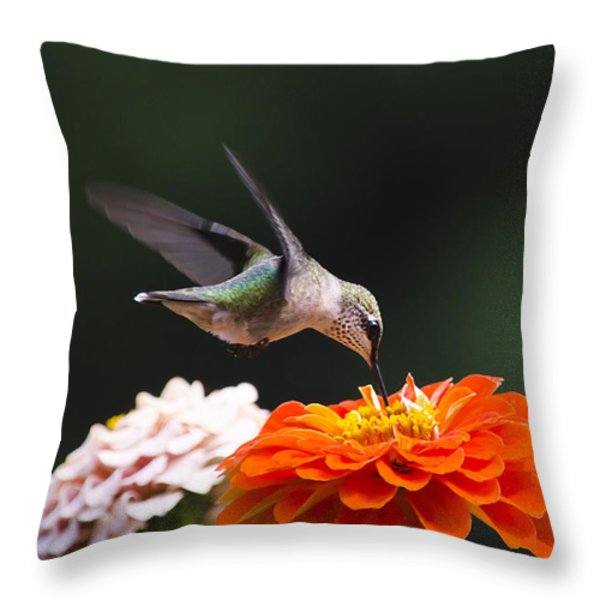 Hummingbird in Flight with Orange Zinnia Flower Throw Pillow by Christina Rollo