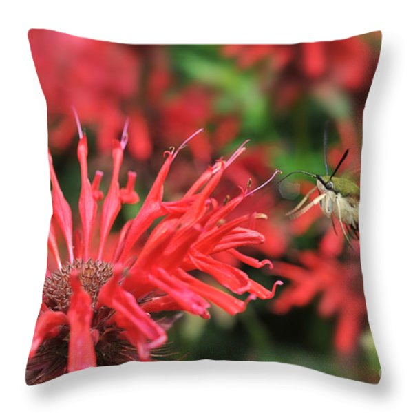 Hummingbird Moth feeding on red flower Throw Pillow by Dan Friend