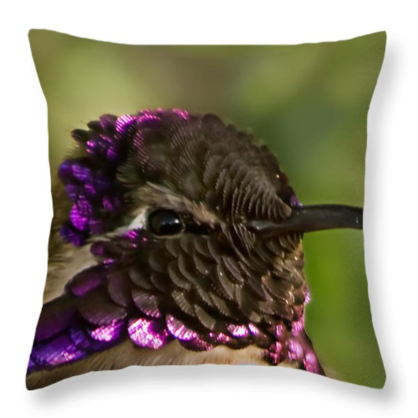 Hummingbird Portrait Throw Pillow by Robert Bales