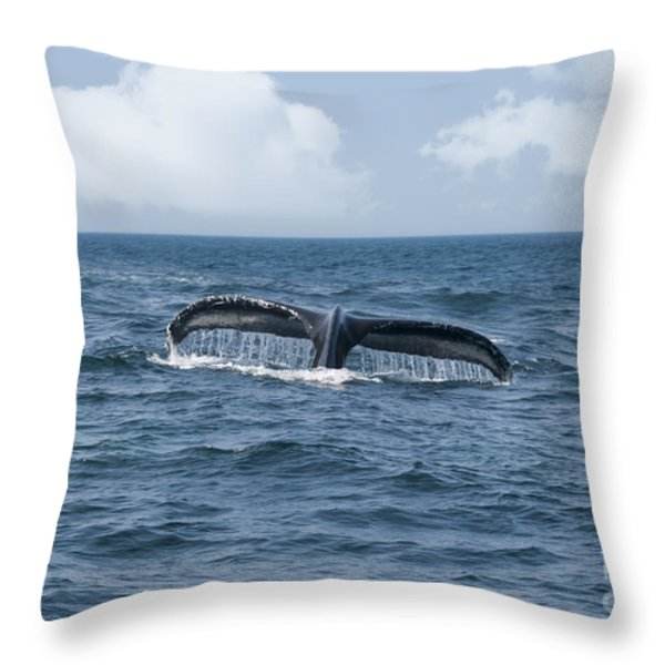Humpback Whale Fin Throw Pillow by Juli Scalzi