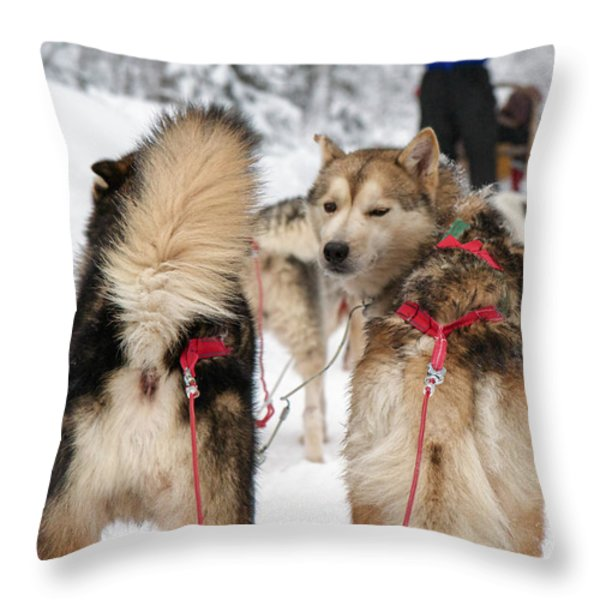 Husky dogs pull a sledge  Throw Pillow by Lilach Weiss