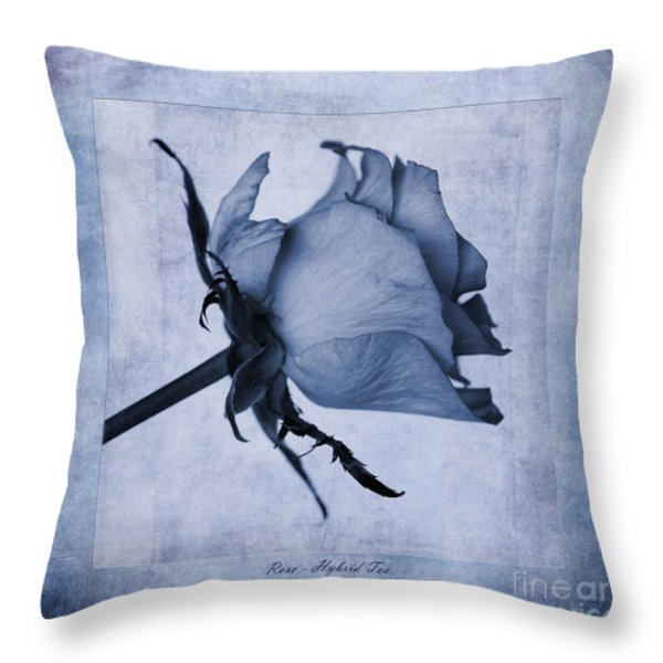 Hybrid Tea Rose Cyanotype Throw Pillow by John Edwards